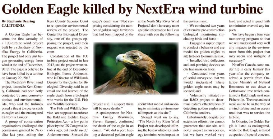 golden eagle killed by NextEra wind turbine feb 27 Teka Story